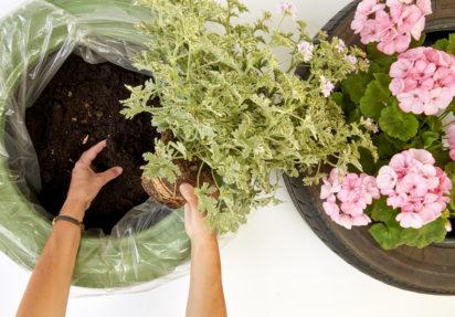 Å plante riktig – ideelle forhold for at plantene dine skal trives maksimalt
