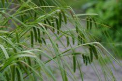 Grønt, vått og vakkert!  Lag ditt eget regnbed med stauder